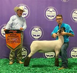 Thompson Livestock - Show Lambs - Winners